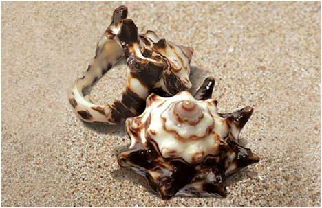 Hadas Merimah | Seashell Ring