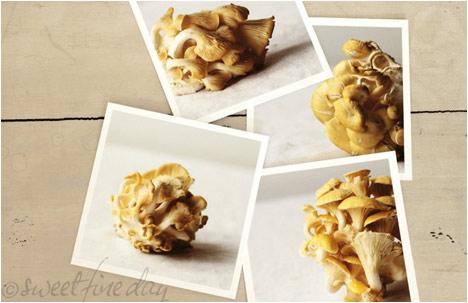 Oyster Mushroom Series no2   4 FIne Art Prints