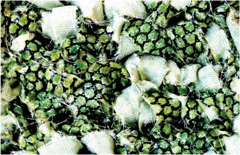 Student Break: Anat Thaler | Reptiled Fabrics