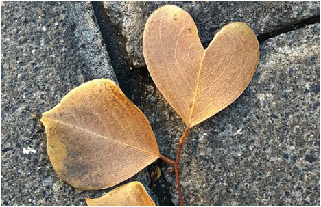 Instagram Break: Heart of Leaves