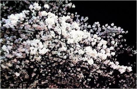 My Japanese Break: Cherry Blossom Madness