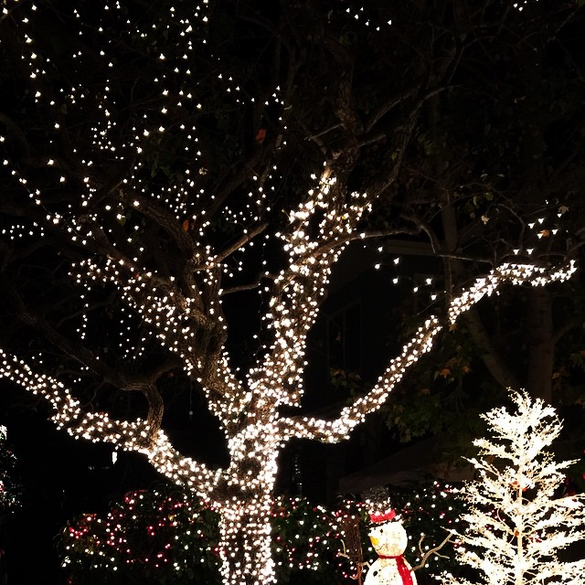 It feels a lot like Christmas around here... // #mysanfranciscobreak